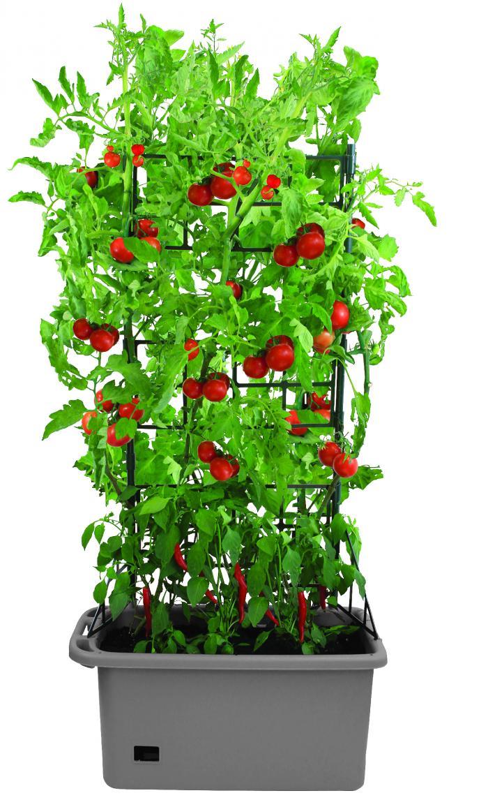 biogreen grow box kleingarten anthrazit. Black Bedroom Furniture Sets. Home Design Ideas
